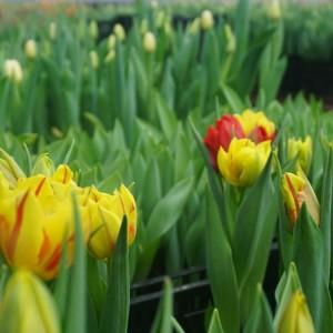 Ферма цветов